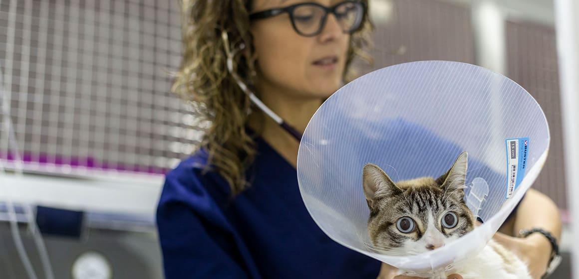 hospital veterinari a Barcelona per a gats
