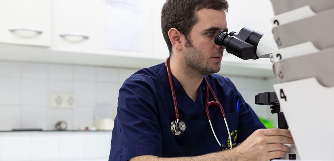 oncologia veterinaria a Barcelona. Hospital Veterinari Balmes